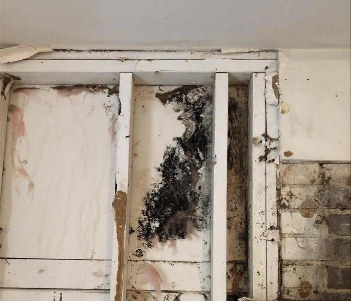 Mold Remediation What Does It Mean for a Company To Be Certified in Mold Cleanup?